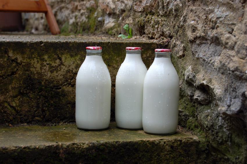 Milk | Image credits:- www.marycrimmins.com